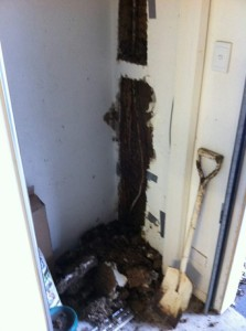 termite electrical prblems